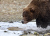 Fast Food, Katmai National Park