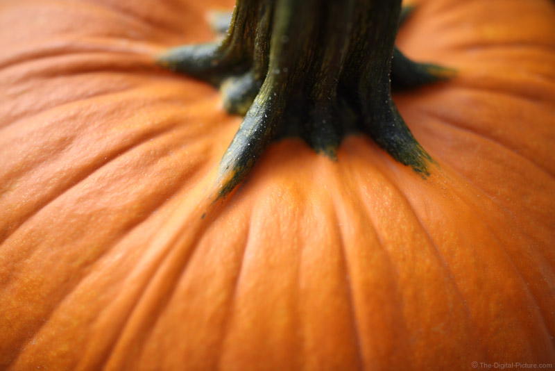 Fall Photography Tips: The Availability of the Color Orange