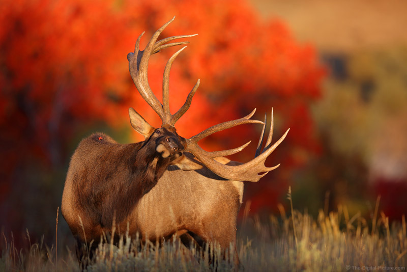 Sometimes, Everything Comes Together Brilliantly – Monster Bull Elk