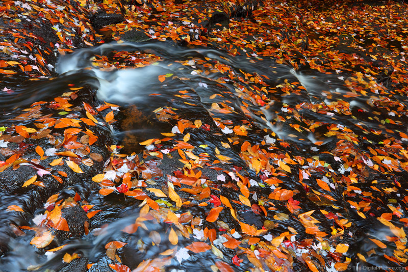 Fall Photography Tips: Don't Forget to Look Down!