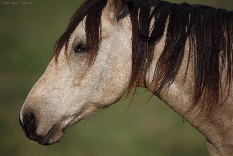 Chocolate-Maned Horse