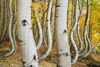 Curved Aspen Trees of Ophir, Colorado