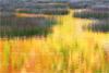 The Tarn 2, Acadia National Park