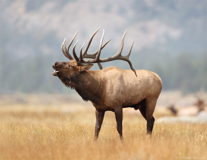This Just In: 1 Opening for the Elk Rut and Fall Landscape in RMNP Photo Workshop